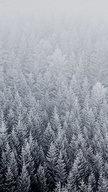 Winter Pine Tr...