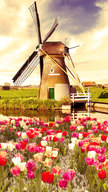 Tulips and Win...