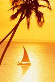 Palm Tress Sun...