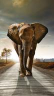 Elephant on Ro...