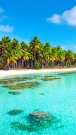 Beach Tropics