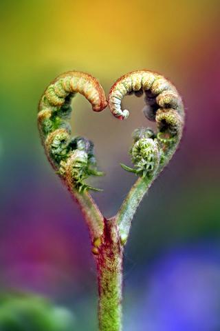Heart Stem
