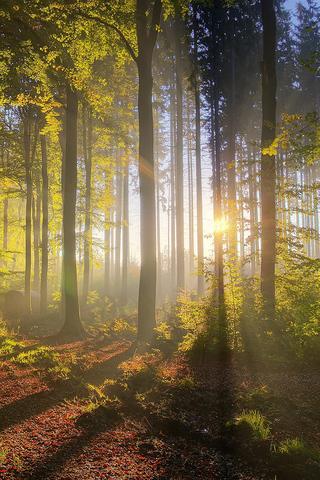 Shining Trees